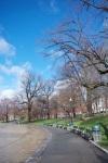 Public Garden @ Boston